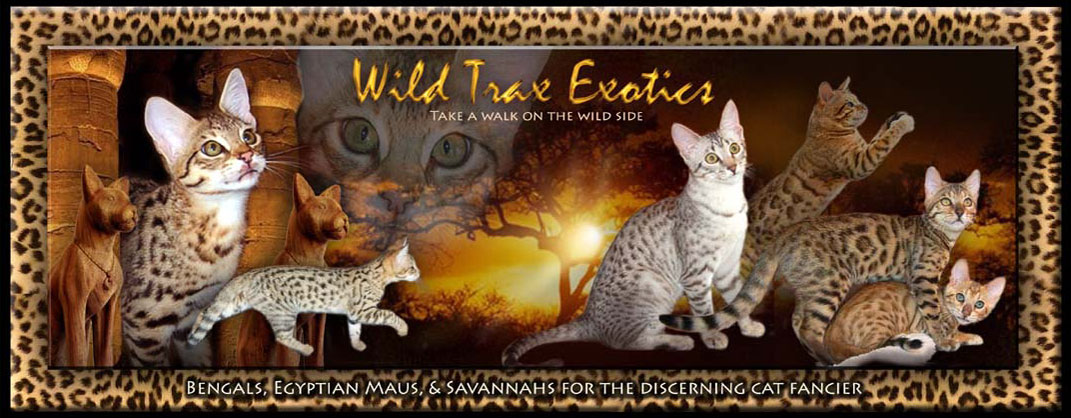 Savannah Cat FAQ